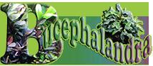Logo Bucephalandrapara web peq