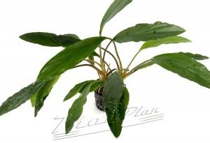 Aridarum (2) ManPlan