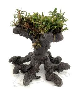 bonsai (2) ManPlan