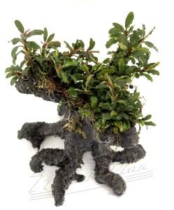 bonsai (3) ManPlan